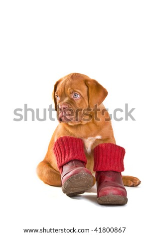 Puppy Wearing Red Shoes Ready For Cold Weather Walk, Isolated
