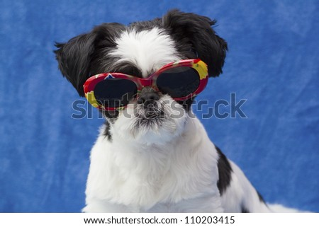 puppy wearing sunglasses