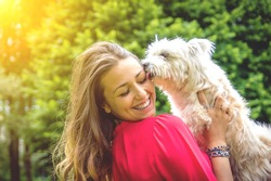 Puppy white dog licking it's owner. Attractive caucasian girl having fun with her dog