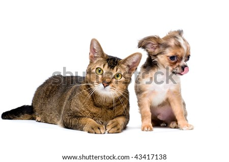 Puppy with a cat #43417138