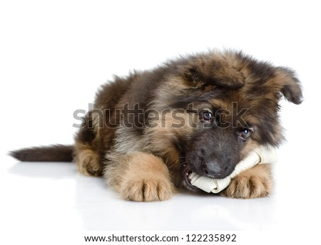 puppy with a dog bone.  isolated on white background