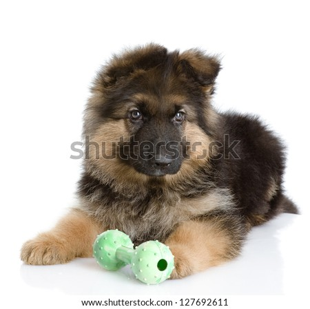 puppy with a toy. isolated on white background - stock photo