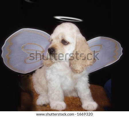 Puppy with halo and angel wings - stock photo
