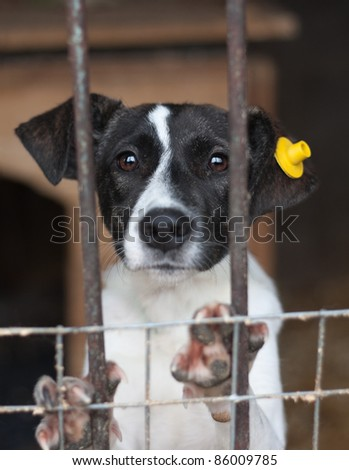 Puppy with label on the ear locked in the cage