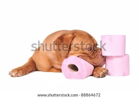 Puppy with pile of fluffy toilet paper isolated