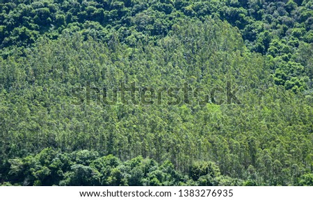 Pure green and pure air coming from these large trees from a Brazilian forest. #1383276935
