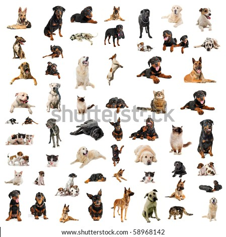 purebred dogs puppies and cats on a white background