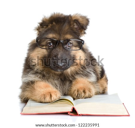 purebred puppy in glasses read book isolated on white background