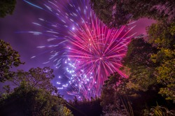 Purple and Magenta Fireworks over the trees in the woods