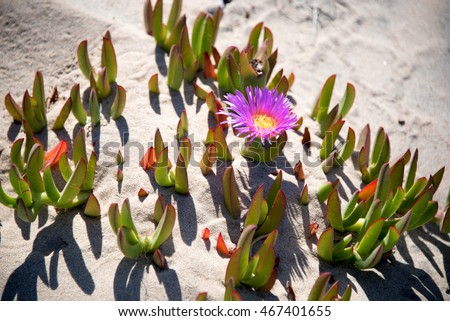 Free photos purple and yellow beach vine flower avopix purple and yellow beach vine flower 467401655 mightylinksfo