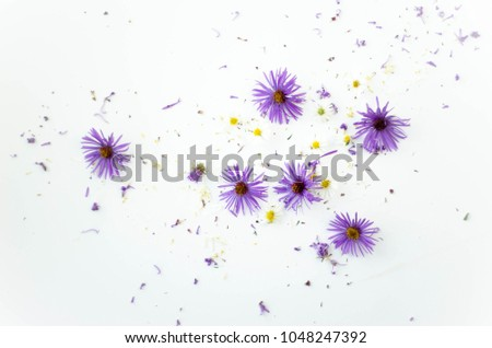 purple and yellow flowers on white background white space #1048247392