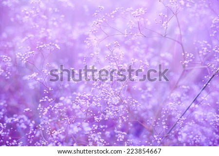purple background with small flowers #223854667