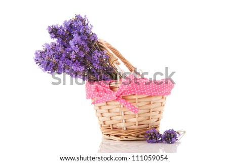 Purple bouquet Lavender in cute basket isolated over white background