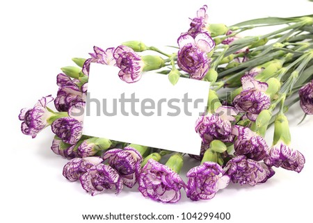 Purple Carnation flower with blank card on white background.