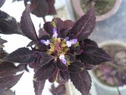purple colored beautiful plant wallpaper