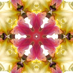Purple Concentric Flower Center Macro Close-up. Mandala Kaleidoscopic design
