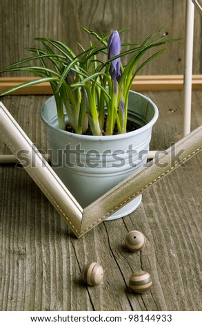 Purple crocus flower in white bucket with decorated boders and balls on old wooden table