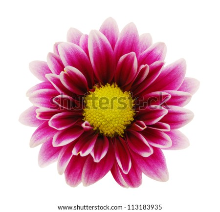 Free photos purple dahlia flowers with yellow center and white leaf purple dahlia flower with yellow center and white leaf edges isolated on white background 113183935 mightylinksfo