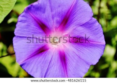 Purple flower. #481626115
