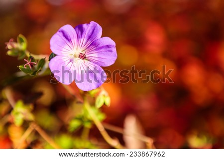 Purple flower and vibrant red background #233867962