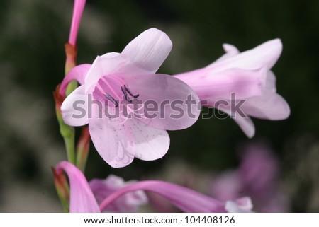 purple flower, beautiful nature photo - stock photo