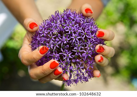 Purple flower in the shape of a ball in the women's hands