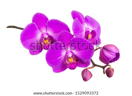 Purple flower of a phalaenopsis orchid with several buds on a branch close-up, isolated on a white background Photo stock ©