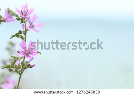 Purple flower on blue and green background