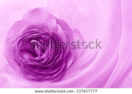 purple flower on soft satin