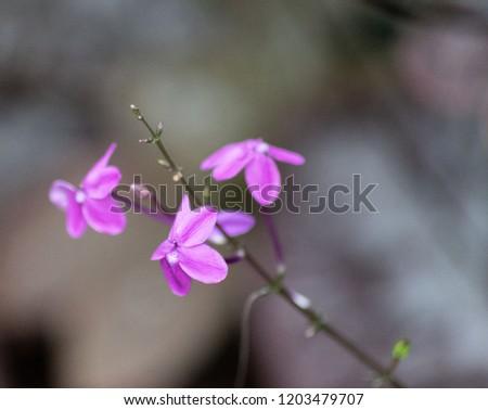 purple flower petal. #1203479707
