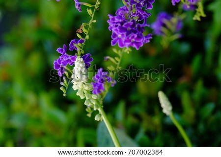 Purple flowers and small white flowers with bright green leaves purple flowers and small white flowers with bright green leaves mightylinksfo