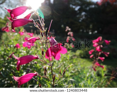Purple flowers between green grass, with a calyx or goblet, in the sun in autumn