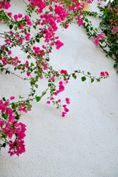purple flowers blooming in the garden in summer against a white wall