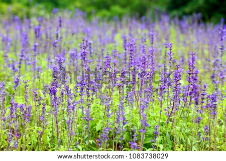 Purple flowers in repetition Pattern / Natural Pattern Background #1083738029