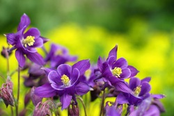 purple flowers in wild nature
