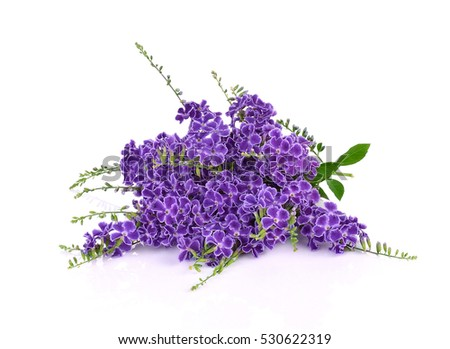 Purple flowers isolated on a white background ez canvas purple flowers isolated on a white background mightylinksfo