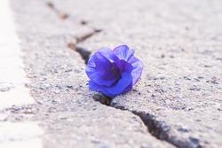 Purple flowers on a rocky floor with a broken rock.