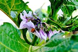 Purple Flowers. Purple implies grandeur and luxury