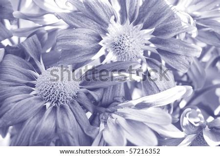 purple flowers texture