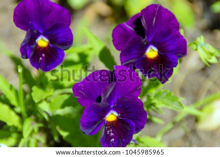 Free photos purple flowers with yellow center avopix purple flowers with yellow center 1045985965 mightylinksfo