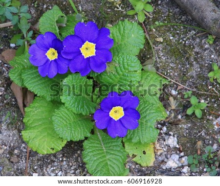 Free photos purple flowers with yellow center avopix purple flowers with yellow center 606916928 mightylinksfo