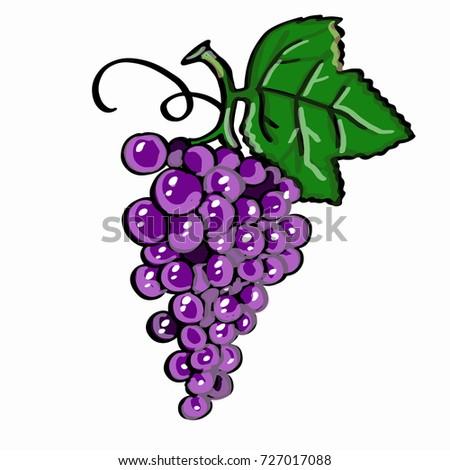 purple grape   and white background  Stok fotoğraf ©