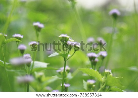 Stock Photo Purple grass flower. Natural flower background.