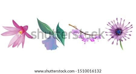Purple Hatiora. Purple Bllflower. Purple Komakusa. Purple Osteospermum Daisybush. Illustration. Isolated illustration element. Floral botanical flower. Wild leaf wildflower isolated. Exotic tropical.