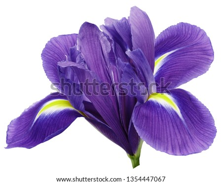 purple iris flower, white isolated background with clipping path.   Closeup.  no shadows.   For design.  Nature. Foto stock ©