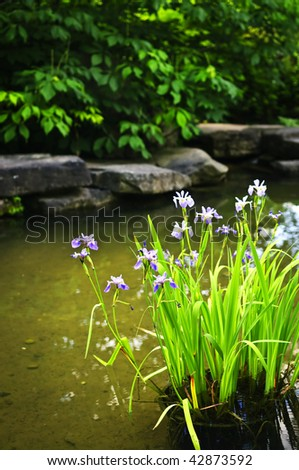 Purple iris flowers in landscaped natural garden pond