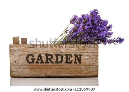 Purple lavender twigs in garden crate