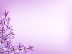 Purple lilac background