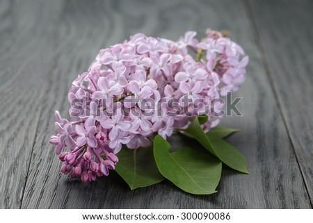 purple lilac flower on old oak table, summer rustic flowers