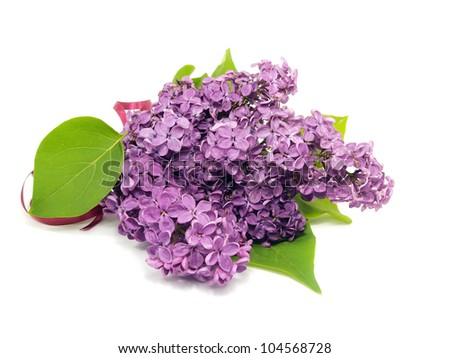 purple lilac flowers (Syringa vulgaris) on white background